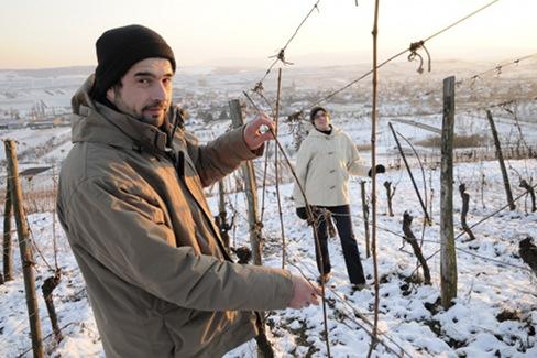 Etienne Loew dans ses vignes l'hiver