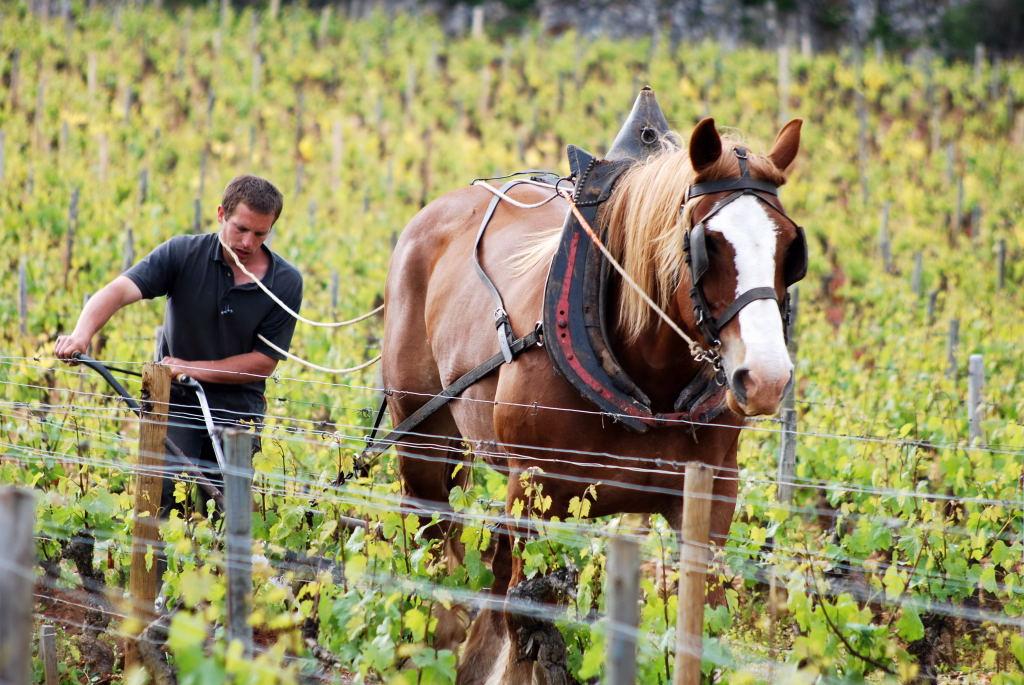 labour à cheval vin bio